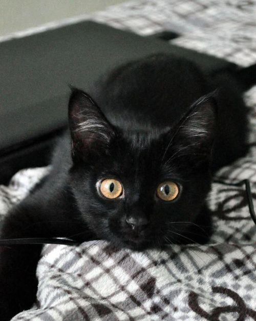 Katzen Bilder Baby - Katzen Bilder Baby