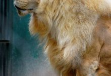 Katzen Bilder Download 220x150 - Katzen Bilder Download