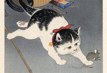 Katzen Bilder Download Bilder Kostenlos 220x150 - Katzen Bilder Download Bilder Kostenlos