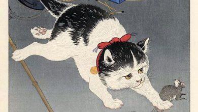 Katzen Bilder Download Bilder Kostenlos 390x220 - Katzen Bilder Download Bilder Kostenlos