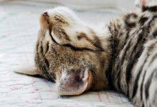 Katzen Bilder Mit Sprüchen 220x150 - Katzen Bilder Mit Sprüchen