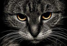 Katzen Bilder Mit Spruch 220x150 - Katzen Bilder Mit Spruch