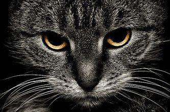 Katzen Bilder Mit Spruch 333x220 - Katzen Bilder Mit Spruch