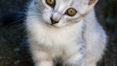 Katzen Bilder Video 390x220 - Katzen Bilder Video