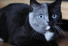 Katzen Erstellen 220x150 - Katzen Erstellen
