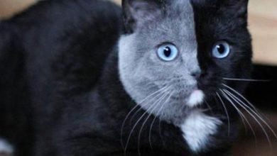 Katzen Erstellen 390x220 - Katzen Erstellen
