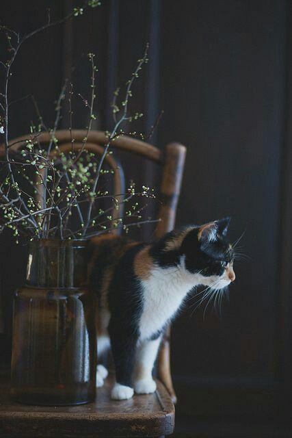 Katzen Erziehen - Katzen Erziehen