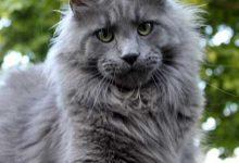 Katzen Essen 220x150 - Katzen Essen