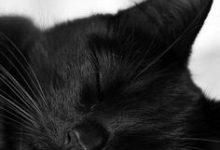 Katzen Fotos 220x150 - Katzen Fotos