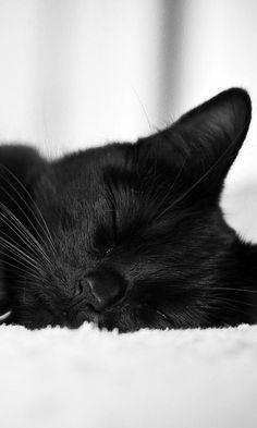 Katzen Fotos - Katzen Fotos