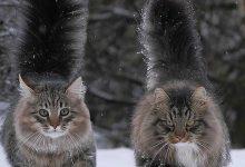 Katzen Gedicht 220x150 - Katzen Gedicht
