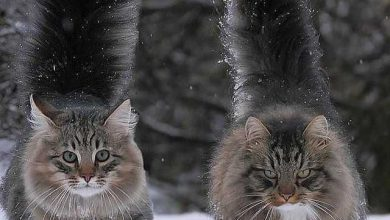 Geburtstag Katze Lustig Bilder Und Sprüche Für Whatsapp