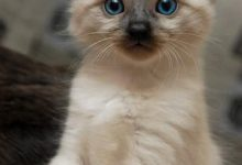Katzen Gemälde Bilder Kostenlos 220x150 - Katzen Gemälde Bilder Kostenlos