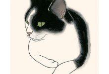 Katzen Gesucht Kostenlos 220x150 - Katzen Gesucht Kostenlos