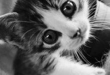 Katzen Hintergrundbilder Kostenlos 220x150 - Katzen Hintergrundbilder Kostenlos