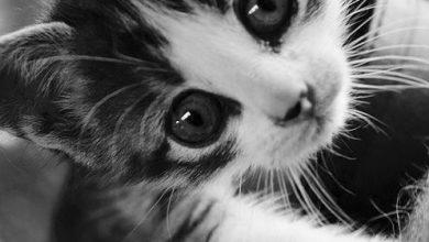 Katzen Hintergrundbilder Kostenlos 390x220 - Katzen Hintergrundbilder Kostenlos