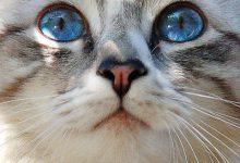 Katzen Hintergrundbilder Kostenlos Herunterladen 220x150 - Katzen Hintergrundbilder Kostenlos Herunterladen
