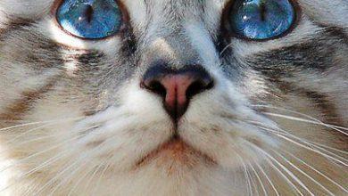 Katzen Hintergrundbilder Kostenlos Herunterladen 390x220 - Katzen Hintergrundbilder Kostenlos Herunterladen