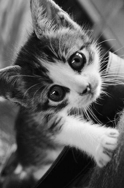 Katzen Hintergrundbilder Kostenlos Bilder Und Sprüche Für Whatsapp