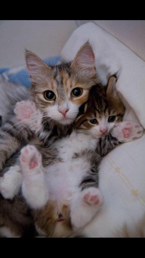 Katzen Infos - Katzen Infos