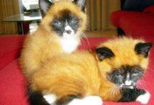 Katzen Junge Bilder Kostenlos 220x150 - Katzen Junge Bilder Kostenlos