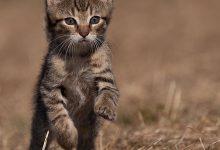 Katzen Katzenrassen Bilder 220x150 - Katzen Katzenrassen Bilder