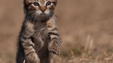 Katzen Katzenrassen Bilder 390x220 - Katzen Katzenrassen Bilder