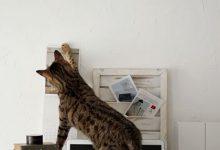 Katzen Kaufen 220x150 - Katzen Kaufen
