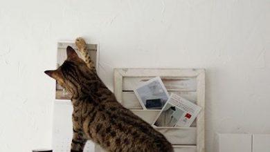 Katzen Kaufen 390x220 - Katzen Kaufen