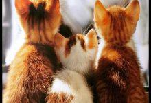 Katzen Kaufen Ebay 220x150 - Katzen Kaufen Ebay