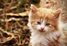 Katzen Kaufen Kleinanzeigen 220x150 - Katzen Kaufen Kleinanzeigen