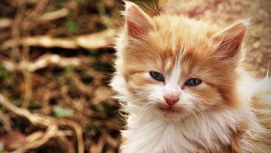 Katzen Kaufen Kleinanzeigen 390x220 - Katzen Kaufen Kleinanzeigen