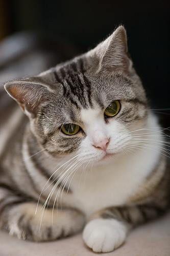 Katzen Kaufen Züchter - Katzen Kaufen Züchter