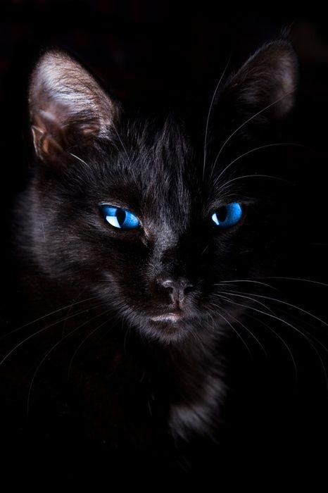 Katzen Kitten - Katzen Kitten