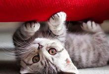 Katzen Kostenlos 220x150 - Katzen Kostenlos