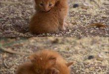 Katzen Lustige Videos 220x150 - Katzen Lustige Videos