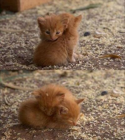 Katzen Lustige Videos - Katzen Lustige Videos