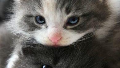 Katzen Mimik Bilder 390x220 - Katzen Mimik Bilder