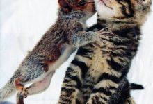 Katzen Motive Bilder Bilder Kostenlos 220x150 - Katzen Motive Bilder Bilder Kostenlos