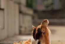 Katzen Pics 220x150 - Katzen Pics