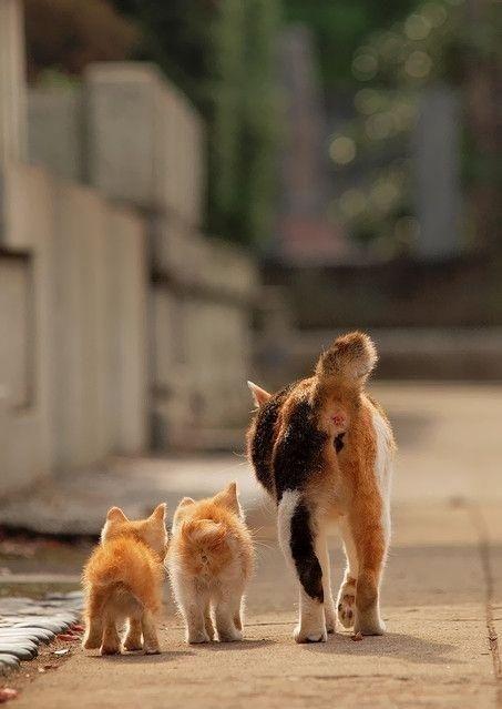 Katzen Pics - Katzen Pics