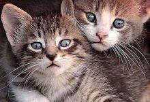Katzen Profilbilder 220x150 - Katzen Profilbilder