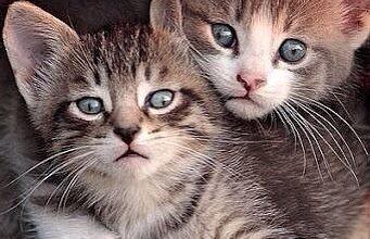 Katzen Profilbilder 341x220 - Katzen Profilbilder