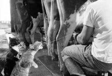 Katzen Schnurren 220x150 - Katzen Schnurren