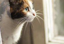 Katzen Schwangerschaft 220x150 - Katzen Schwangerschaft