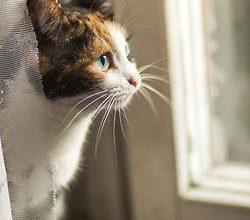 Katzen Schwangerschaft 250x220 - Katzen Schwangerschaft