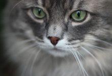 Katzen Sind Süß 220x150 - Katzen Sind Süß