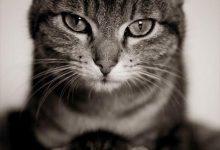 Katzen Sprüche Bilder 220x150 - Katzen Sprüche Bilder