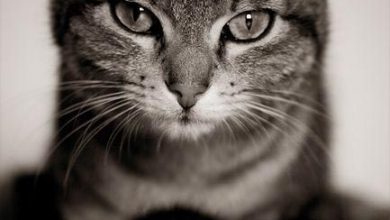 Katzen Sprüche Bilder 390x220 - Katzen Sprüche Bilder