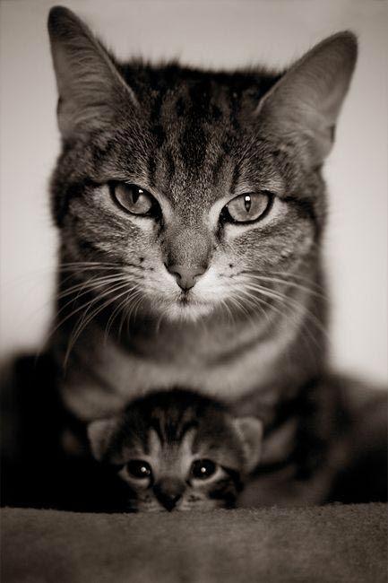 Katzen Sprüche Bilder - Katzen Sprüche Bilder